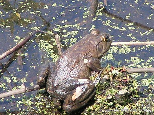 Back of frog-1