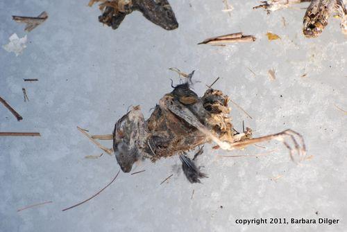 Creatures found in duck box cf