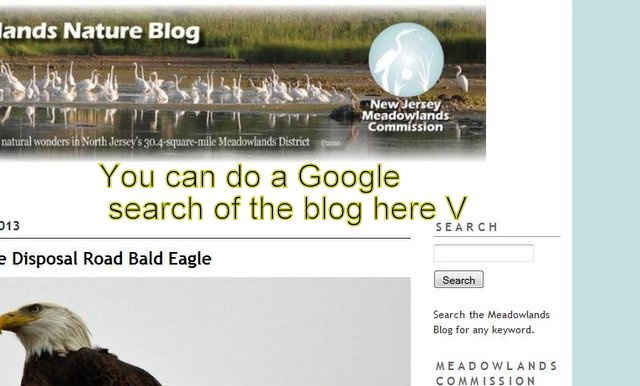 Google Search for blog