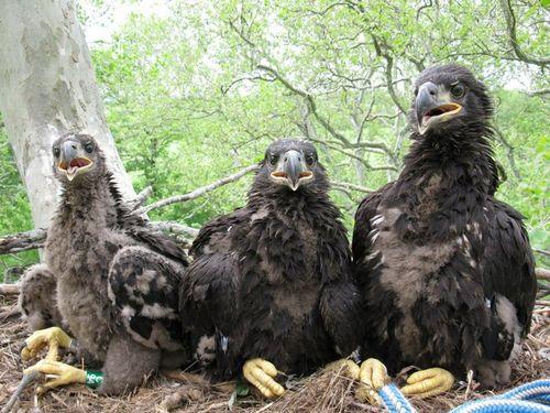 Eagles 011-002