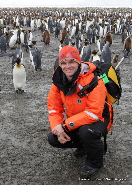 Stryckerpenguins