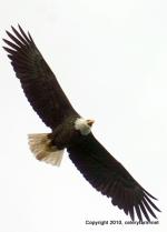 Eagle jan 28