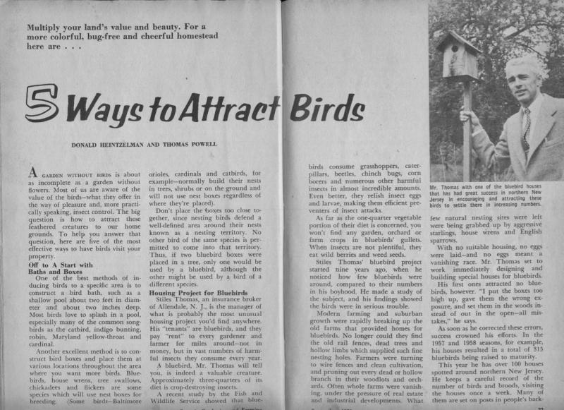 Stiles bluebird story 1