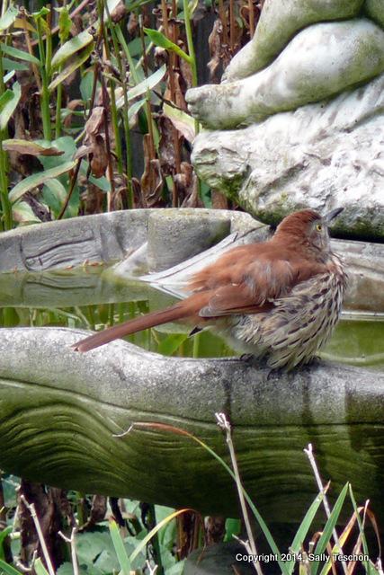 Bird(2)