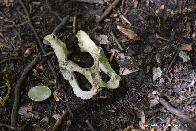 Bone DSC_0492(2)-001