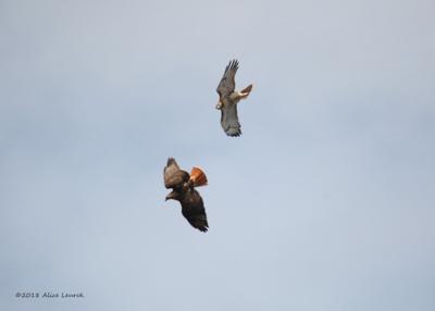 Interaction 2 birds (2)
