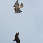 Interaction 2 birds (1)