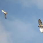 Interaction 2 birds