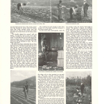 Country Life Burroughs1906 page 2(2)