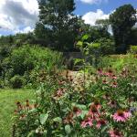 TNC KAY Butterfly Garden 080418 IMG_8807 (1)
