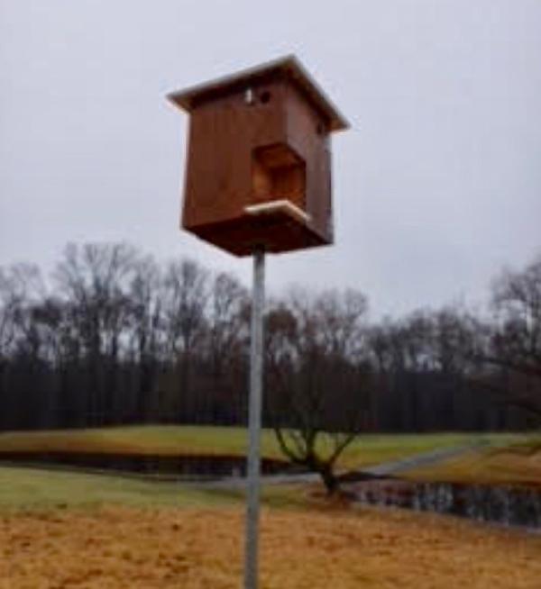 Birdhouse (2)