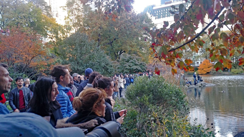 F Virrazzi onlookers at Central Park 2