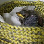 Basket bird(1)