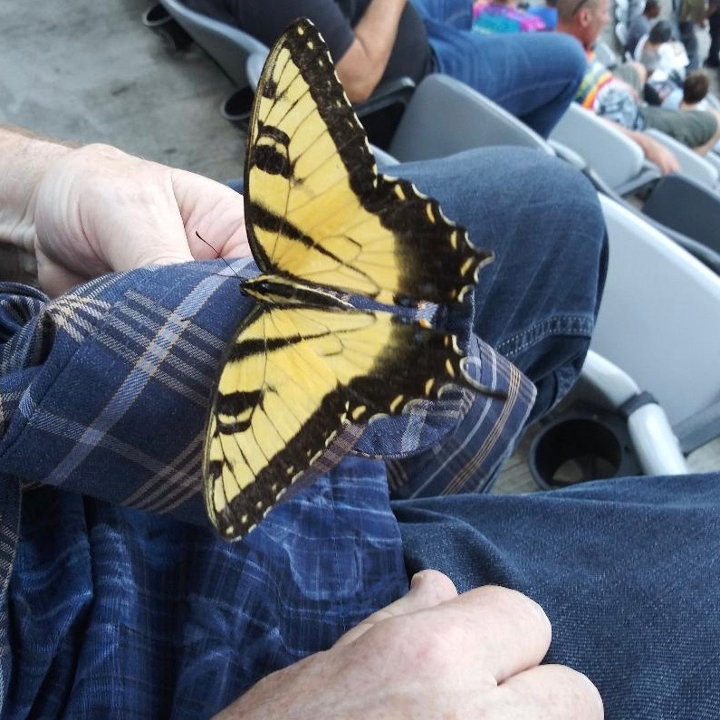 Butterfly at the Stones 8-1-19     01