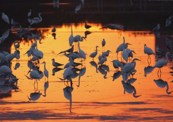 DeKorte Sunrise with Egrets Wright