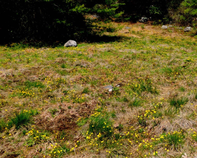 JW 050815 AM long shot DSCN9597-002