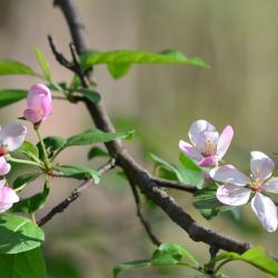 4-29-2011 Spring has Sprung (Small)(1)