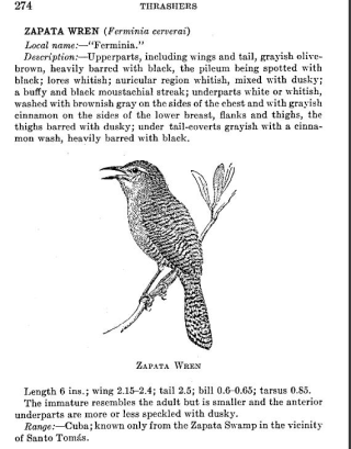 Zapata wren 1936 botwi Screen Shot 2016-06-05 at 3.00.27 PM