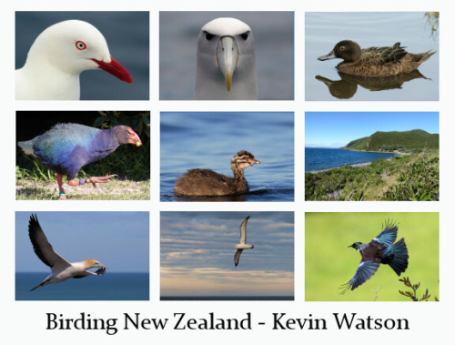 NZ_Promogrid