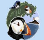 Acadia Birding Festival Screen Shot 2021-05-06 at 9.26.51 PM
